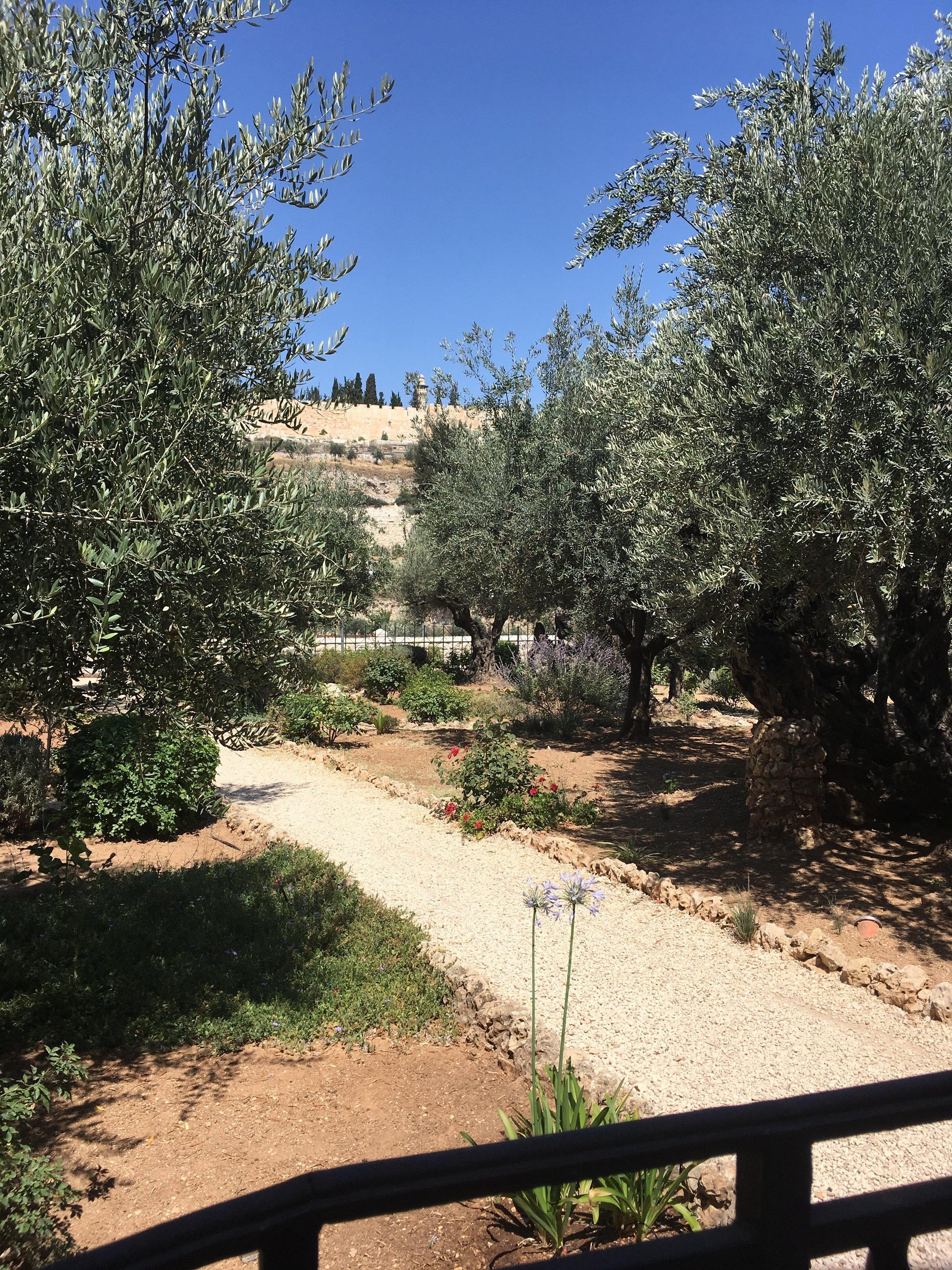 The Garden of Gethsemane, where Jesus prayed