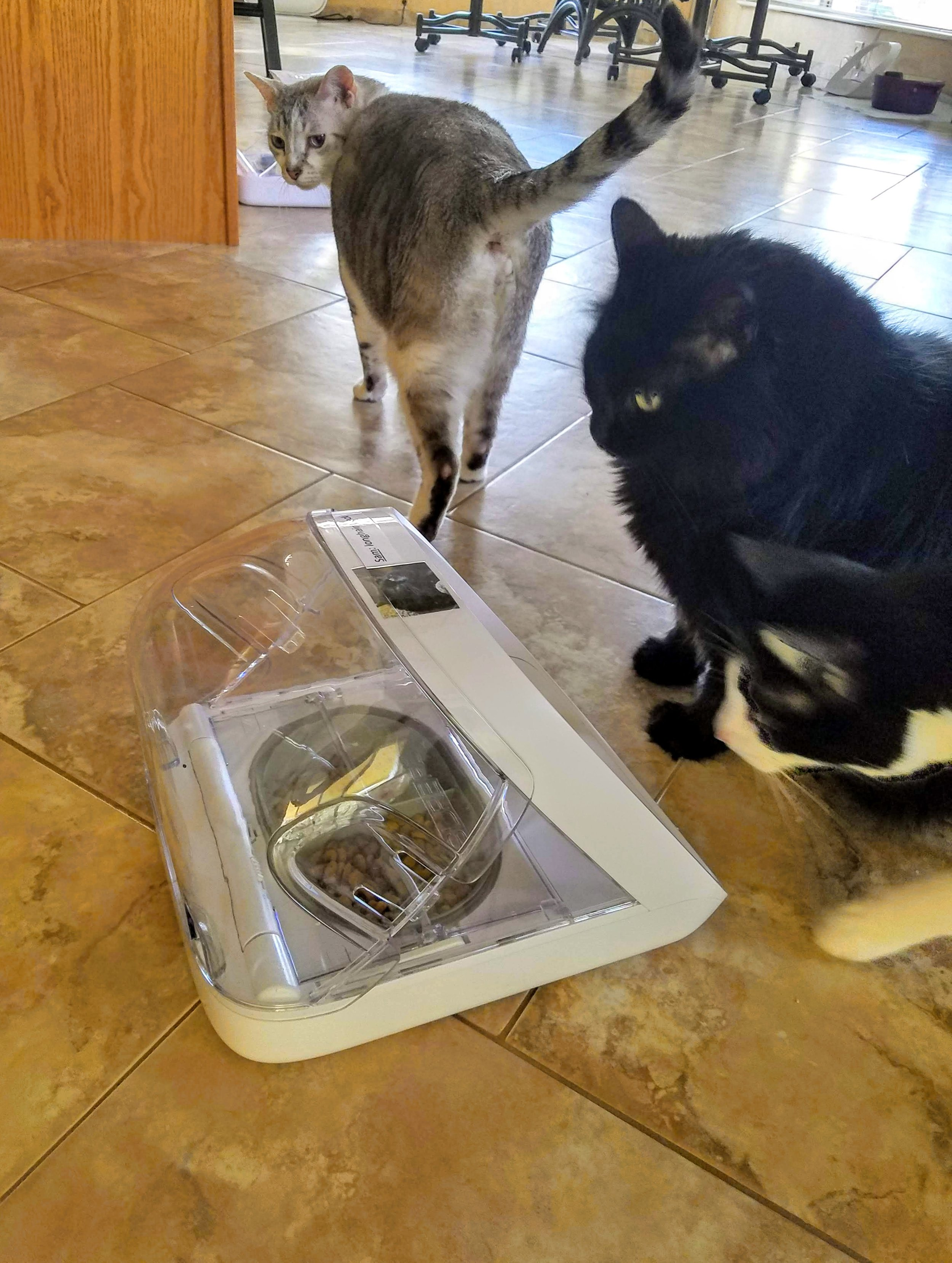 Frankie (top center) and Joey (far right) hoping to sample from Sam's domed feeder.