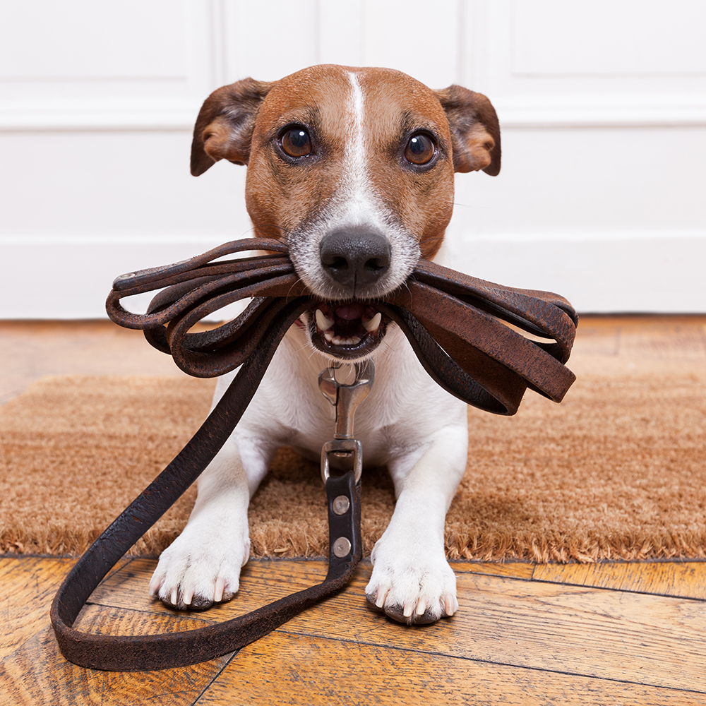 shutterstock_164733143_dogwalking.jpg