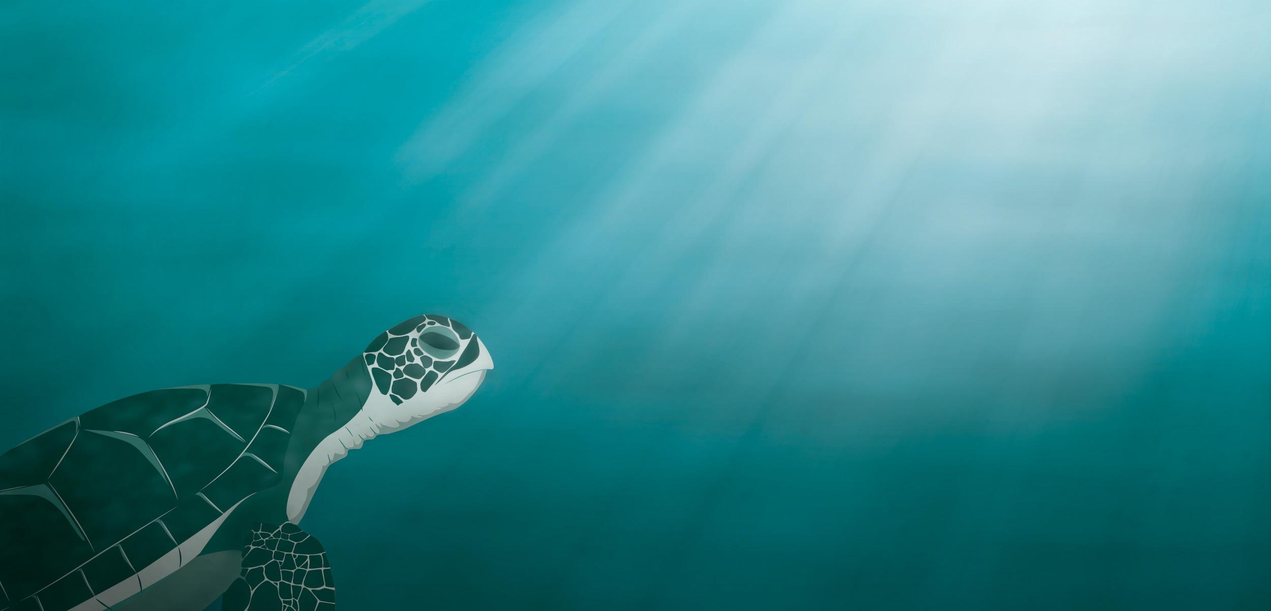 header-ocean-optimism.jpg