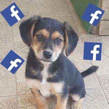 Følg os på Facebook - På vores Facebook side deler vi nyheder og masser af skønne billeder af hundene på vores shelter i Narnia.