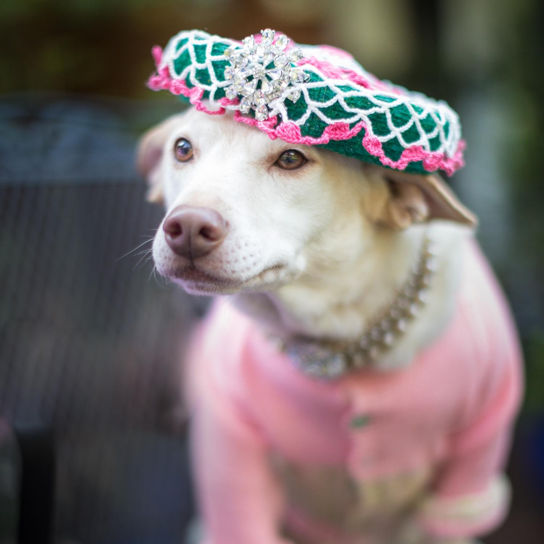 queen-dog.jpg