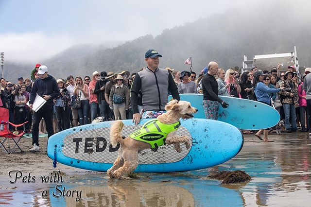 The #surfdogchampionship was an amazing event! Tun of people and all of the dogs.  We all had such a fun time watching the joy of these dogs surf, you can see it in teddy he absolutely can't wait to get out in the surf and hang loose. #surfdogteddy #surfdog #surfdogevents #petswithastory #funwithdogs #oceandog