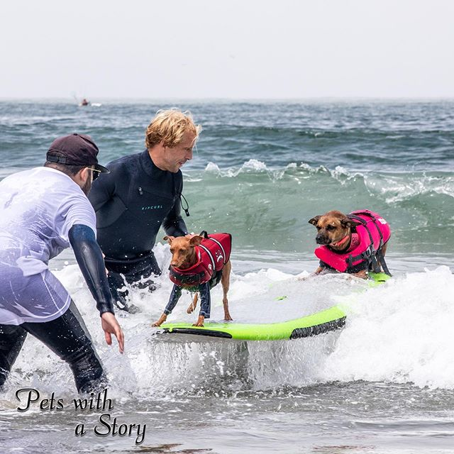 Expertly hanging 10 with @gisellethesurfergirl @rustythesurfingminpin It's no surprise they medaled in this category! It was such a joy to watch these two who knew exactly where to put there weight on the board. #worlddogsurfing #surfdog #hang10 #pacifica