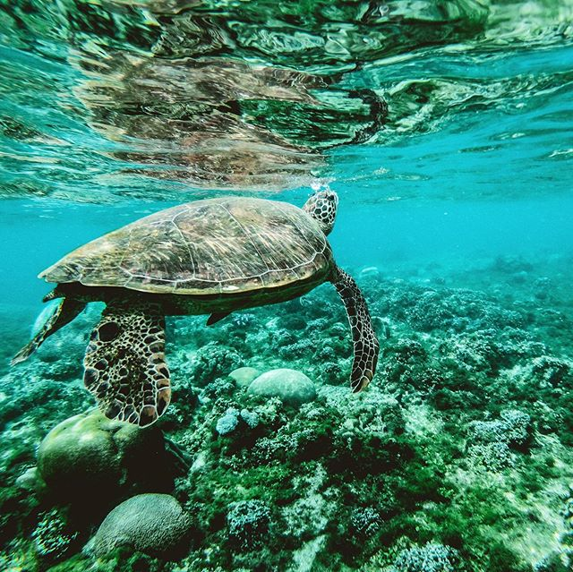 """The Reef Safe """"Movement"""" has led some brands to stay away from the chemical sunscreens Oxybenzone and Octinoxate, as some studies have shown that these SPF ingredients cause defects in developed coral, and also have negative effects on marine life. • • • • • • #skincare #beauty #organicskincare #skincareroutine #natural #greenbeauty #organic #healthyskin #vegan #crueltyfree #skin #cleanbeauty #skincaretips #selfcare #BentleyKnowsBest #ecobeauty #skincareproducts #handmade #love #spf #sunscreen #bagonvalve #summer #reefsafe #reefready #coralreef"""