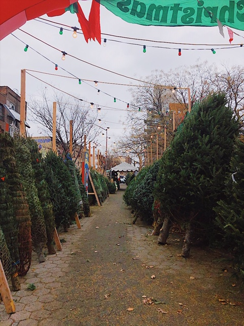 Christmas inspiration in Greenpoint, Brooklyn