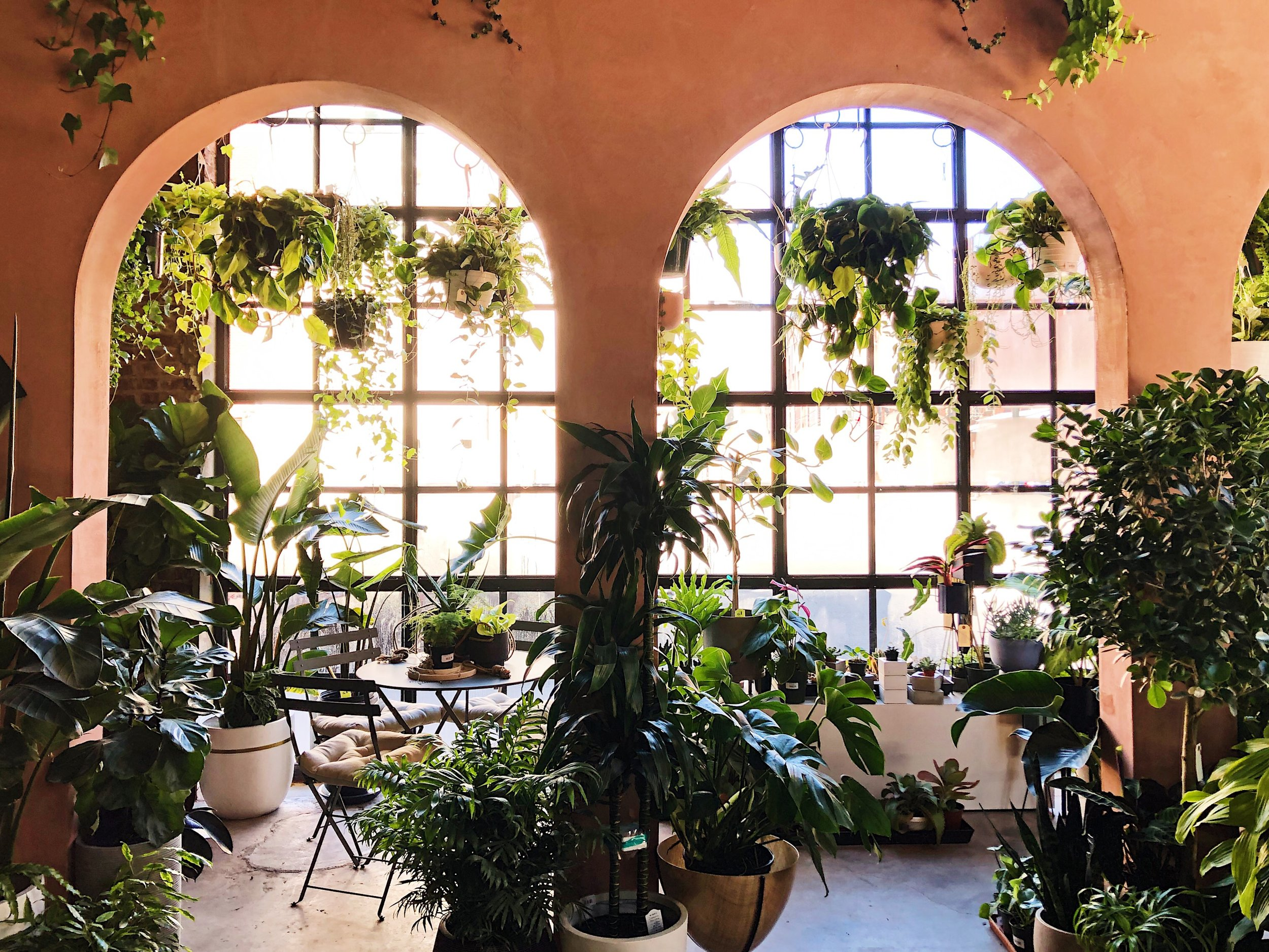 Greenery Unlimited in Greenpoint, Brooklyn.  Ten plant shops in NYC
