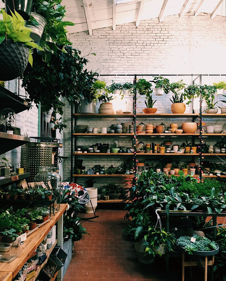 Ten Plant Shops in NYC