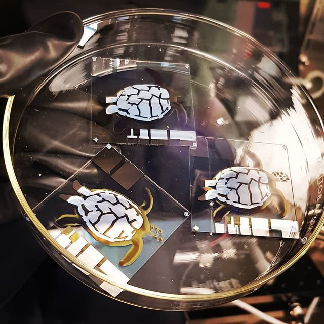 Inkjet Printed Turtles! - 13/8/18How cute are these! Did you know that a group of turtles is called a bale? Well this is a bale of inkjet printed solar cells fabricated by PhD student Daniel Corzo.
