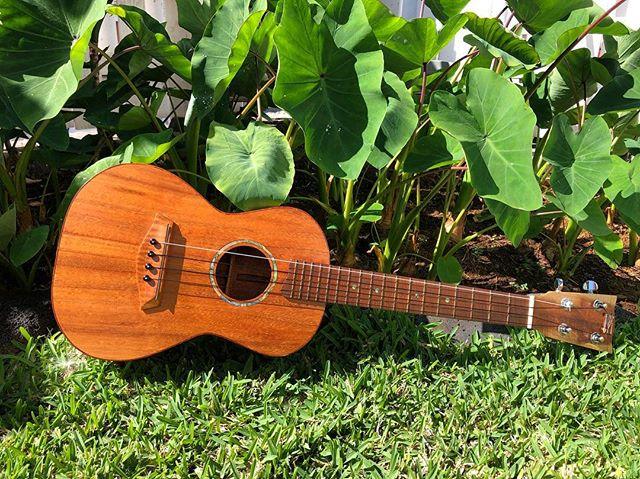 mahalo iā Leonard Kalani Hussey i ke kākoʻo ʻana mai i ke Kūkālā Hāmau o ka ʻAha Aloha ʻŌlelo. E naue mai i Hale Hālāwai ma ka Poʻaono, 1/26, mai ka hola 9am-1:30pm e koho ai i kāu mau koho. . He ʻukulele koa i hana lima ʻia e Leonard Hussey ————— mahalo to Leonard Kalani Hussey for your generous donation to ʻAha Aloha ʻŌlelo's Silent Auction. Come down to Hale Hālāwai on Saturday, 1/26, between 9am-1:30pm to place your bids. . handmade koa tenor ʻukulele, with oyster shell inlay. . #ʻAhaAlohaʻŌlelo #ʻAAʻŌKūkālāHāmau
