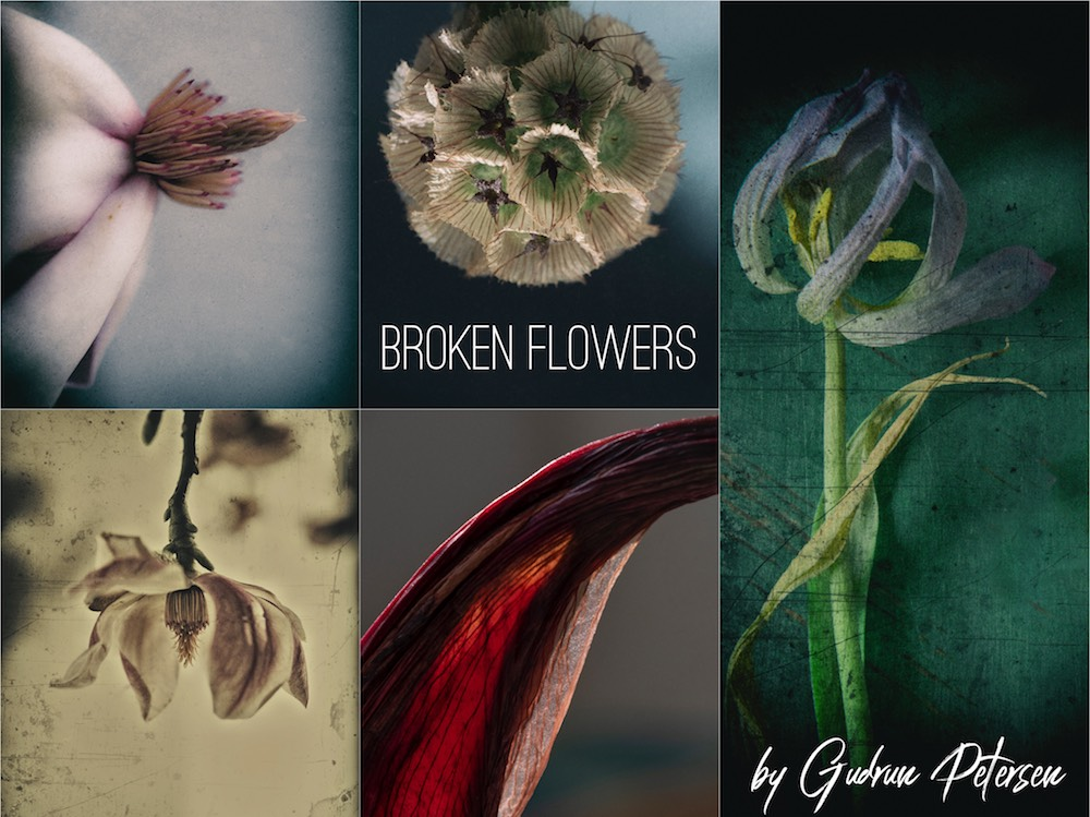 Selection from the art photography series 'Broken Flowers' © Gudrun Petersen - Please click image to enlarge in lightbox.