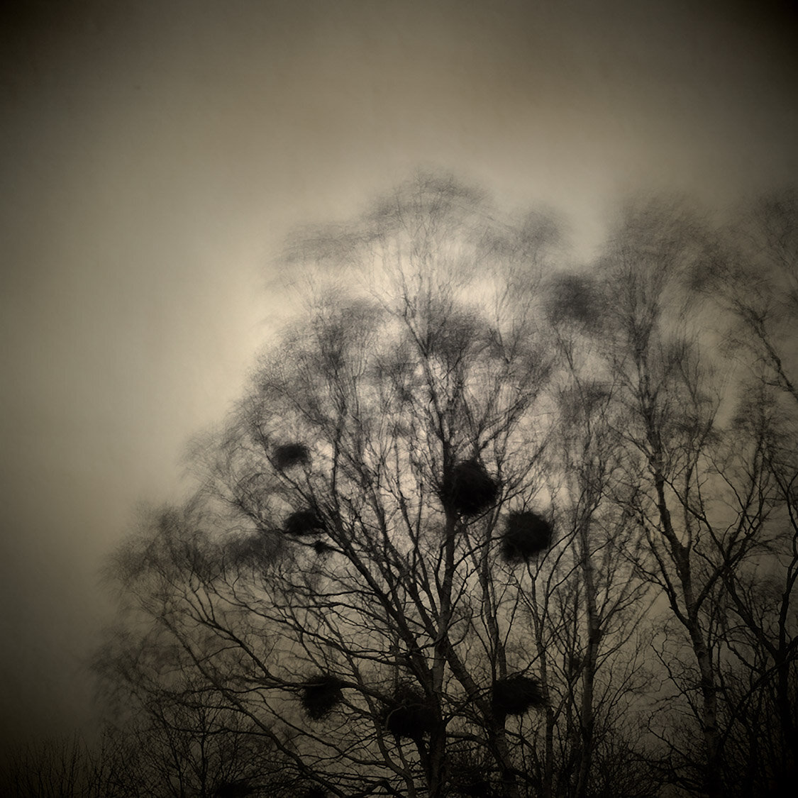 Birds 6 PMF.jpg