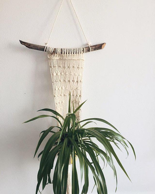 A little custom plant hanger for my biggest supporter, babe @mateiak 💚 #planthanger #macrame #macramedecor #plantsofinstagram