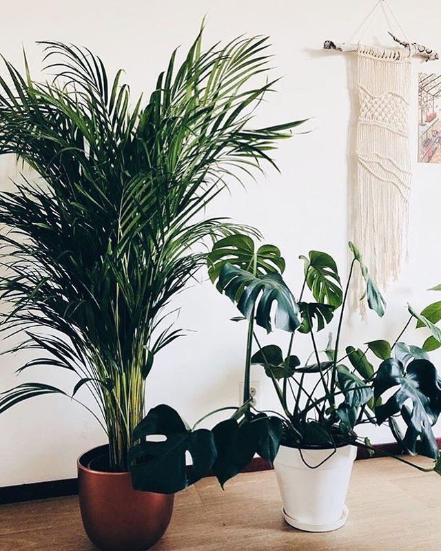 Currently obsessing over this #jungle/#macrame corner of @mijavmijav's apartment.🌱 . . .  #plantsofinstagram #macrame #macramewallhanging #bohodecor #bohointerior #junglevibes #makersofinstagram #smallbusiness