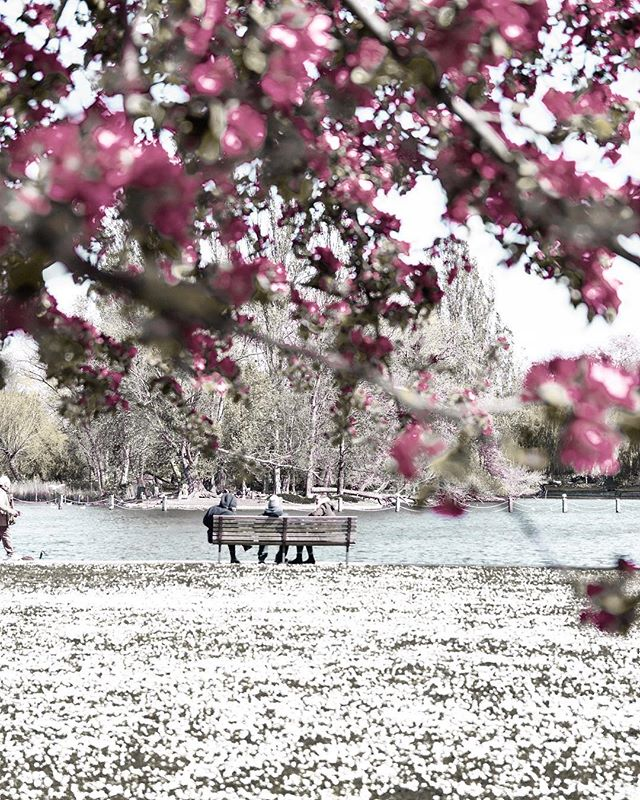"""Spring is nature's way of saying, 'Let's party!'"" Robin Williams. And I couldn't agree more! Happy Friday lovelies ♡ . . . . . #londoninbloom #worldinbloom #wonderfulworld #flowermagic #prettycitylondon #mydarlinglondon #toplondonphoto #instabritain #iamatraveler #stayandwander #searchwandercollect #beautifuldestinations #traveldreamseekers #guardiancities #seekinspirecreate #tv_living #rsa_ladies #culturetrip #darlingescapes #letsgosomewhere #culturetrip_ldn #mytinyatlas #thisislondon #regentspark #myseasonalstories #cntraveler #londoncityworld @uk @out_in_london @its_so_london"
