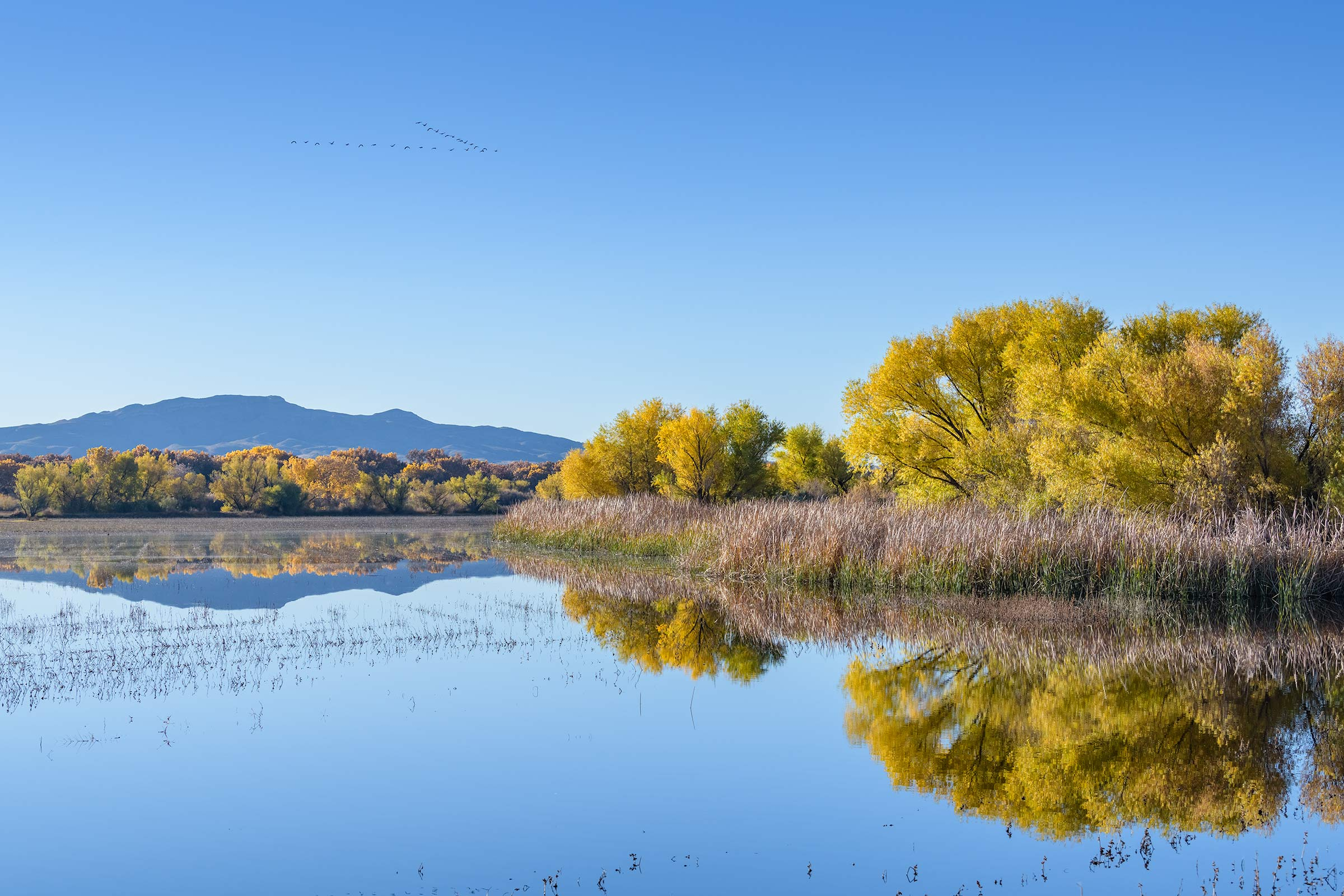 Bosque del Apache Fall Colors