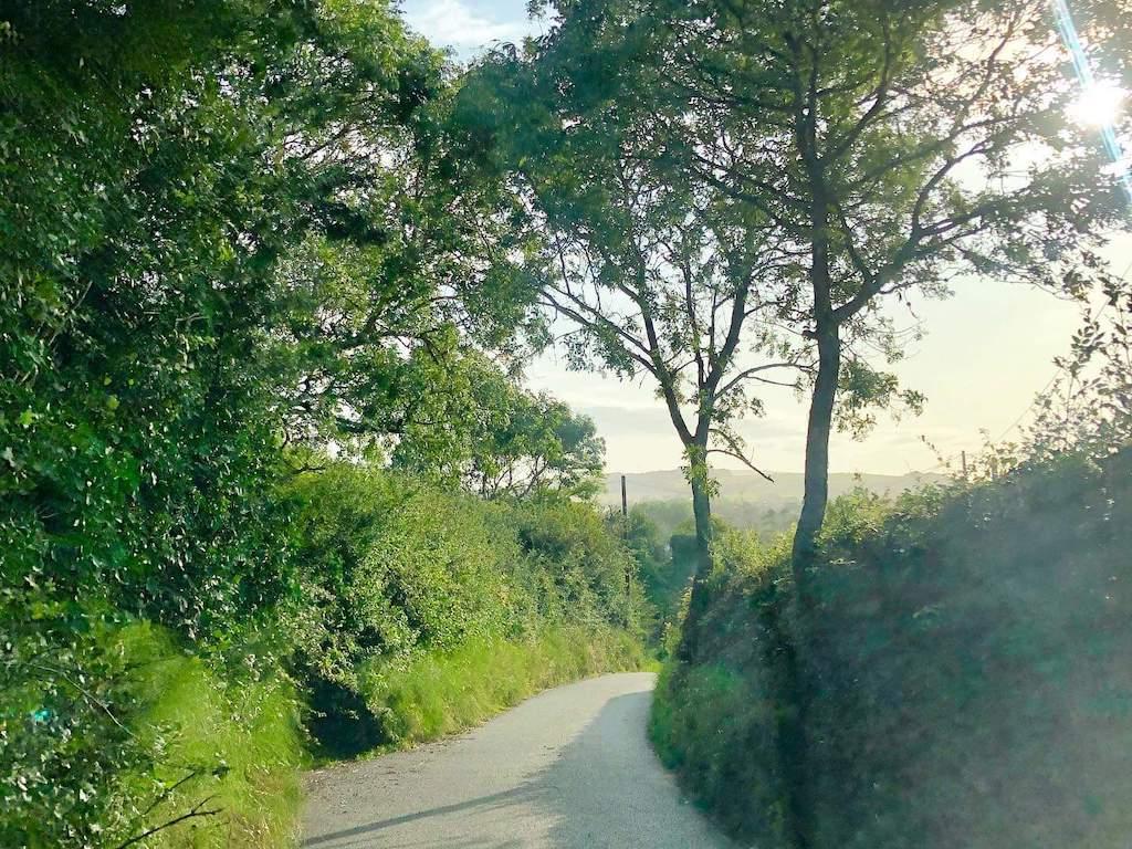 Nettlecombe_Farm_Lane_3.jpg