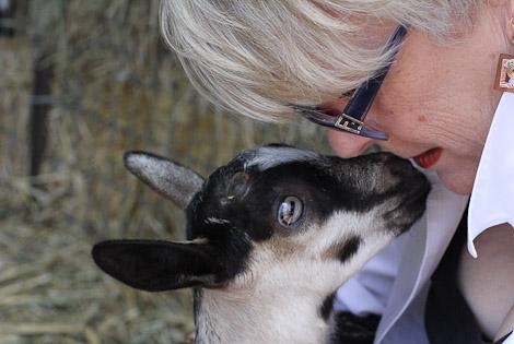 My mother the goat whisperer.