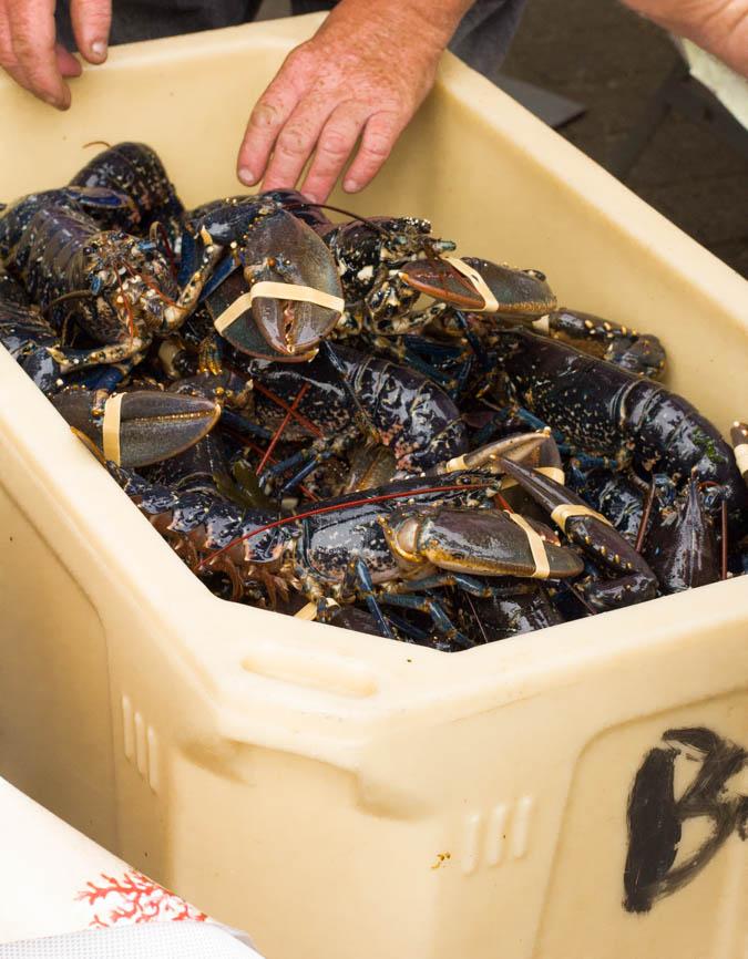 Midleton-Lobsters-blog-Bord-Bia-1-of-1.jpg