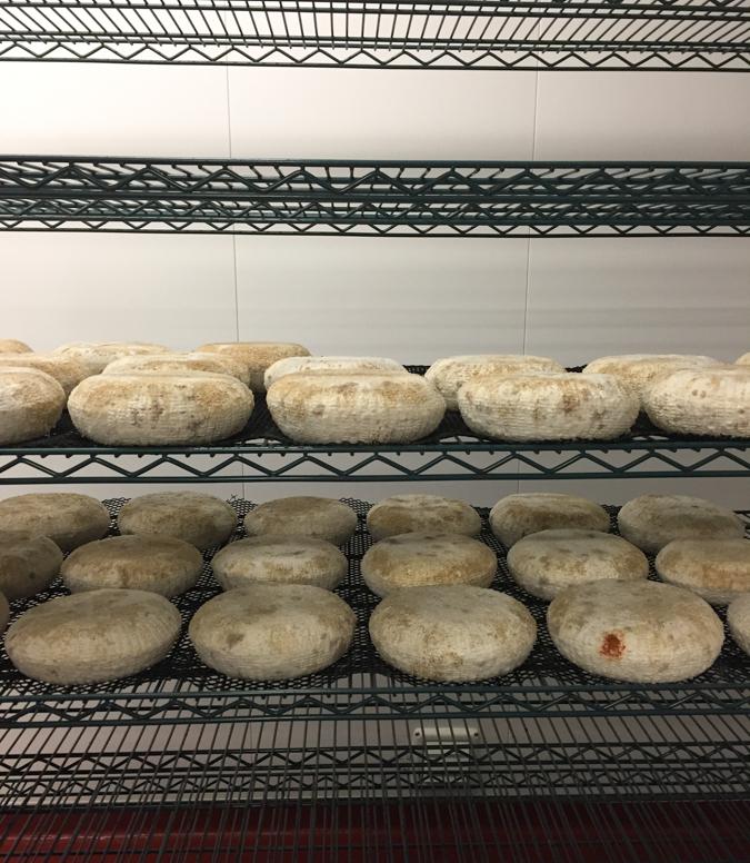 Briar-Rose-cheese-aging-0475.jpg