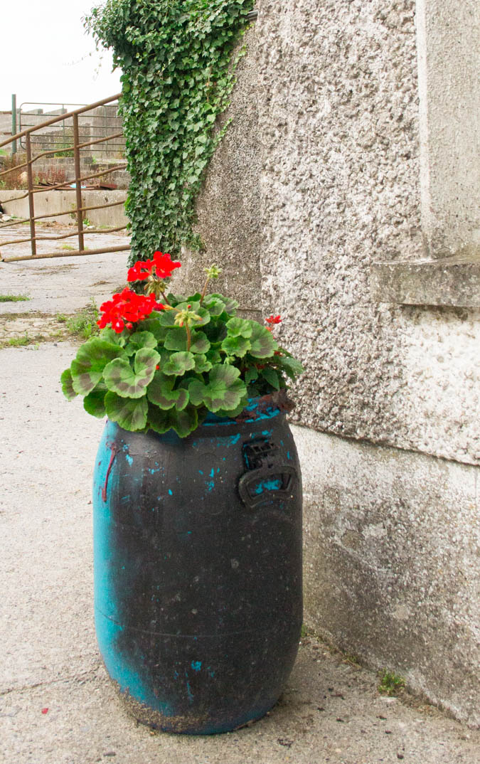Coolattin-Flower-Pot-Blog-Bord-Bia-1-of-1.jpg