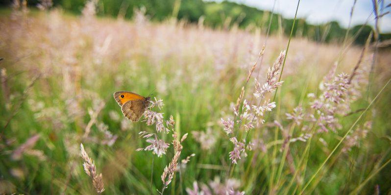 butterfly-798x398.jpg