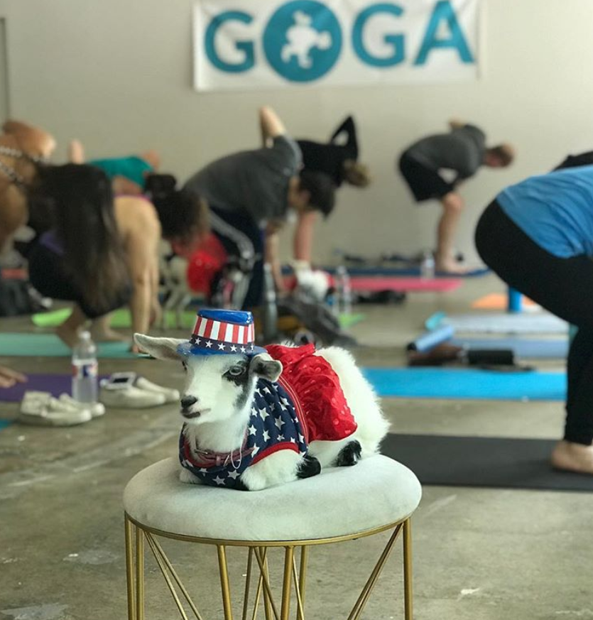 goat-yoga-shark-tank
