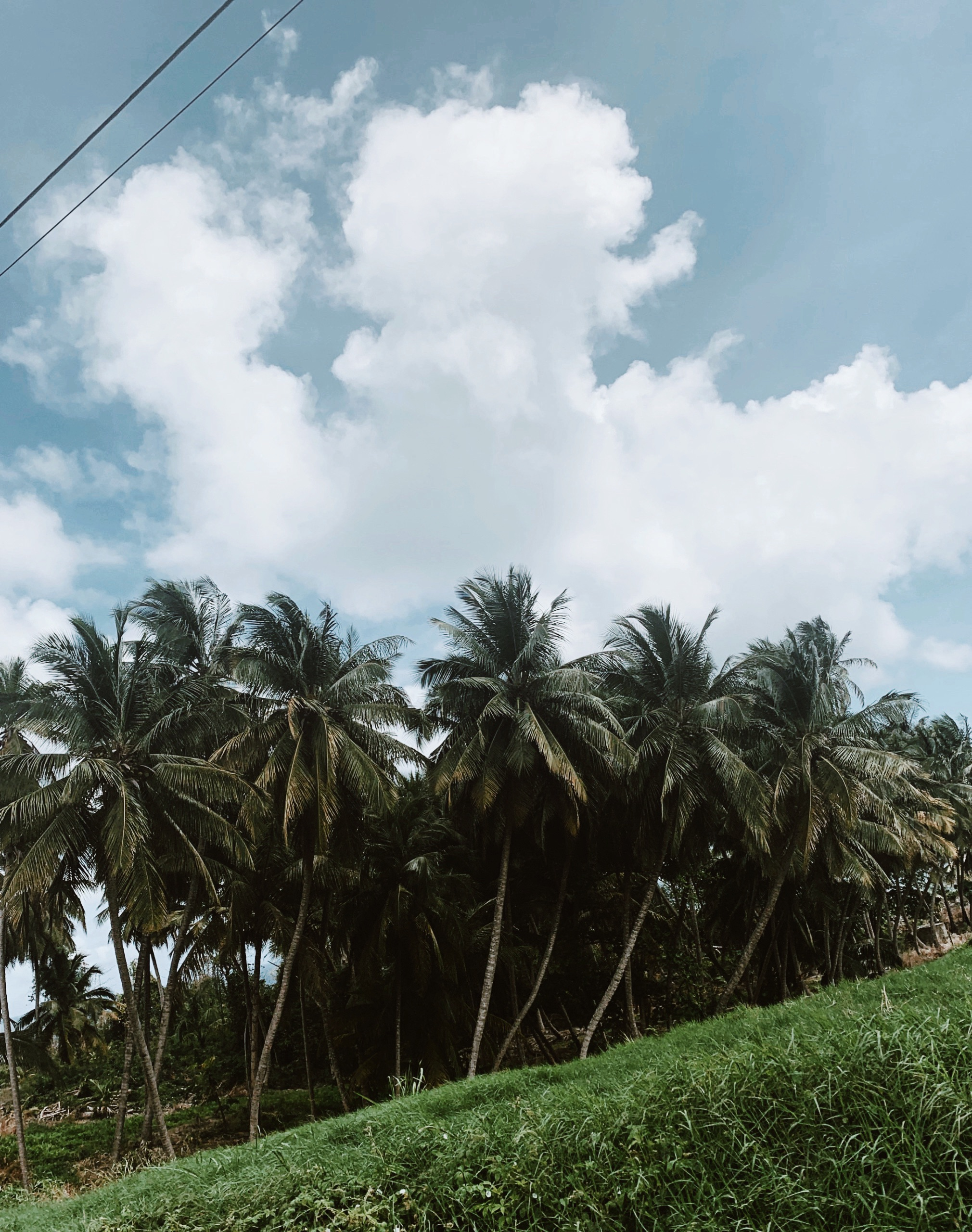 Royal Palm Barbados.jpg