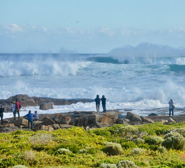 wild-surf.jpg
