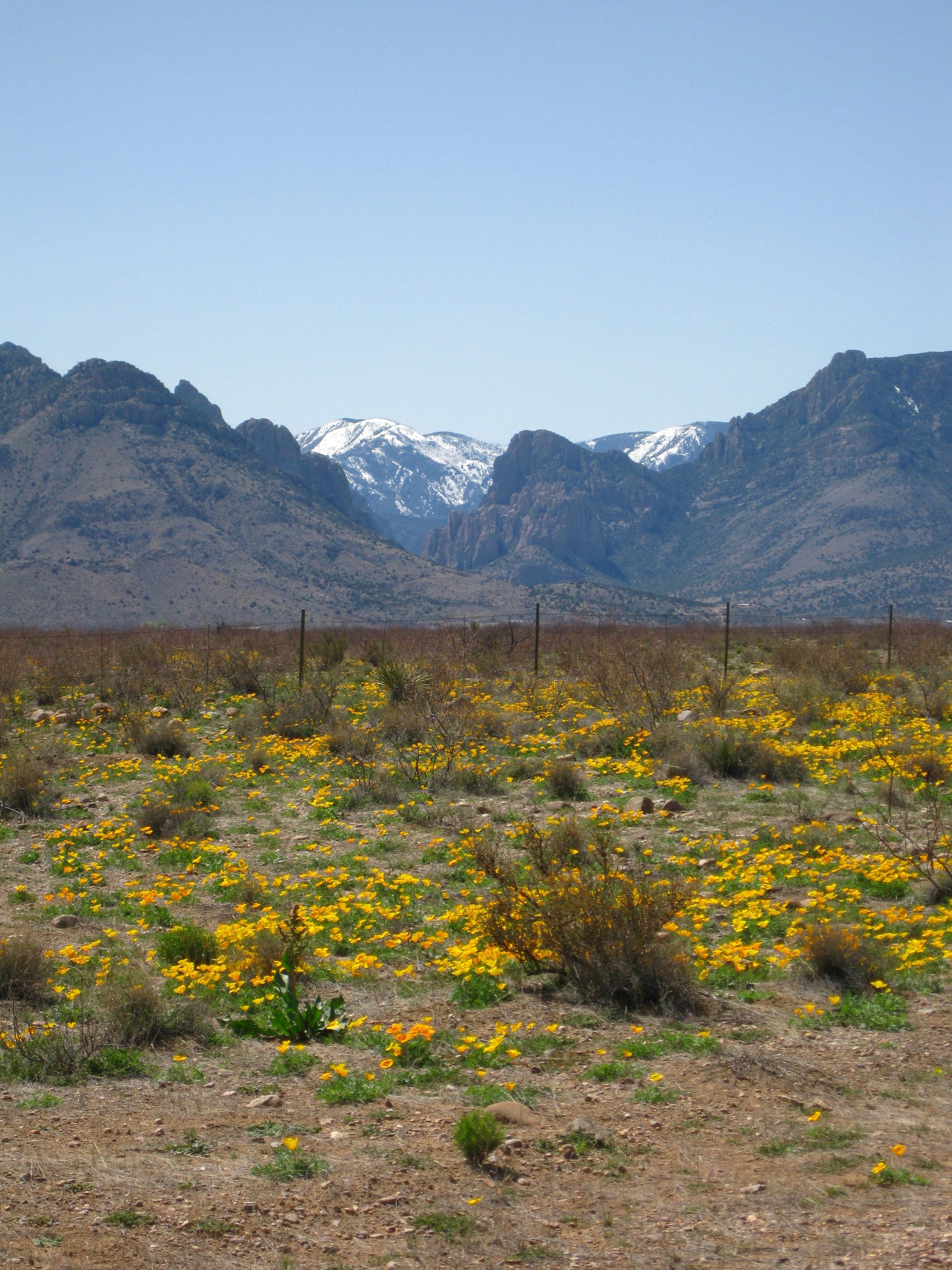 Our field site near Portal, AZ.