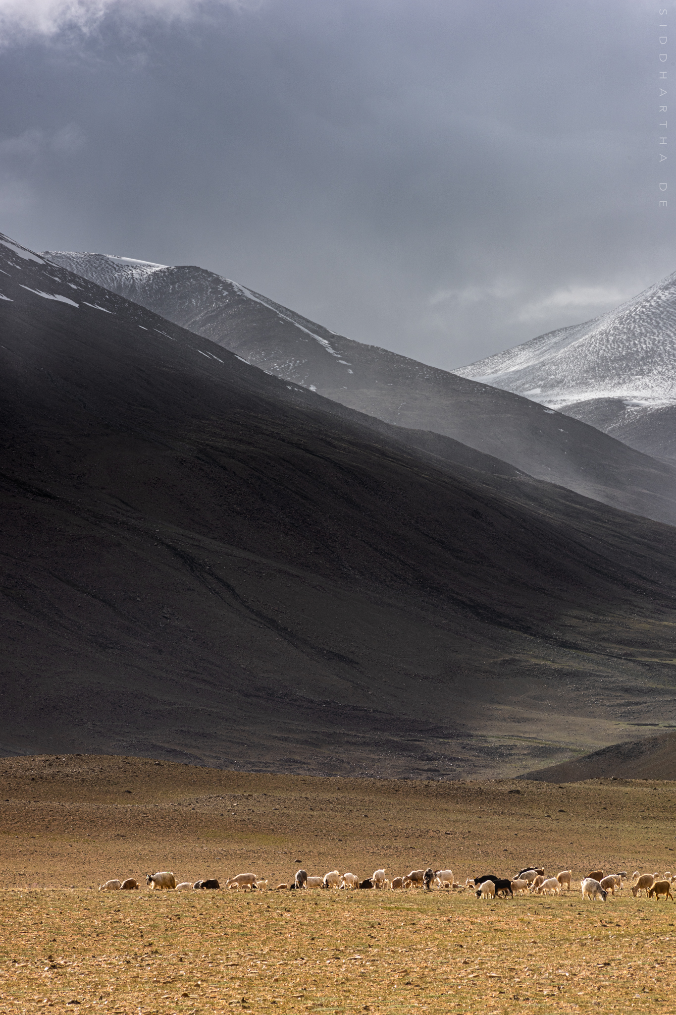 SD Ladakh 2019 06.jpg