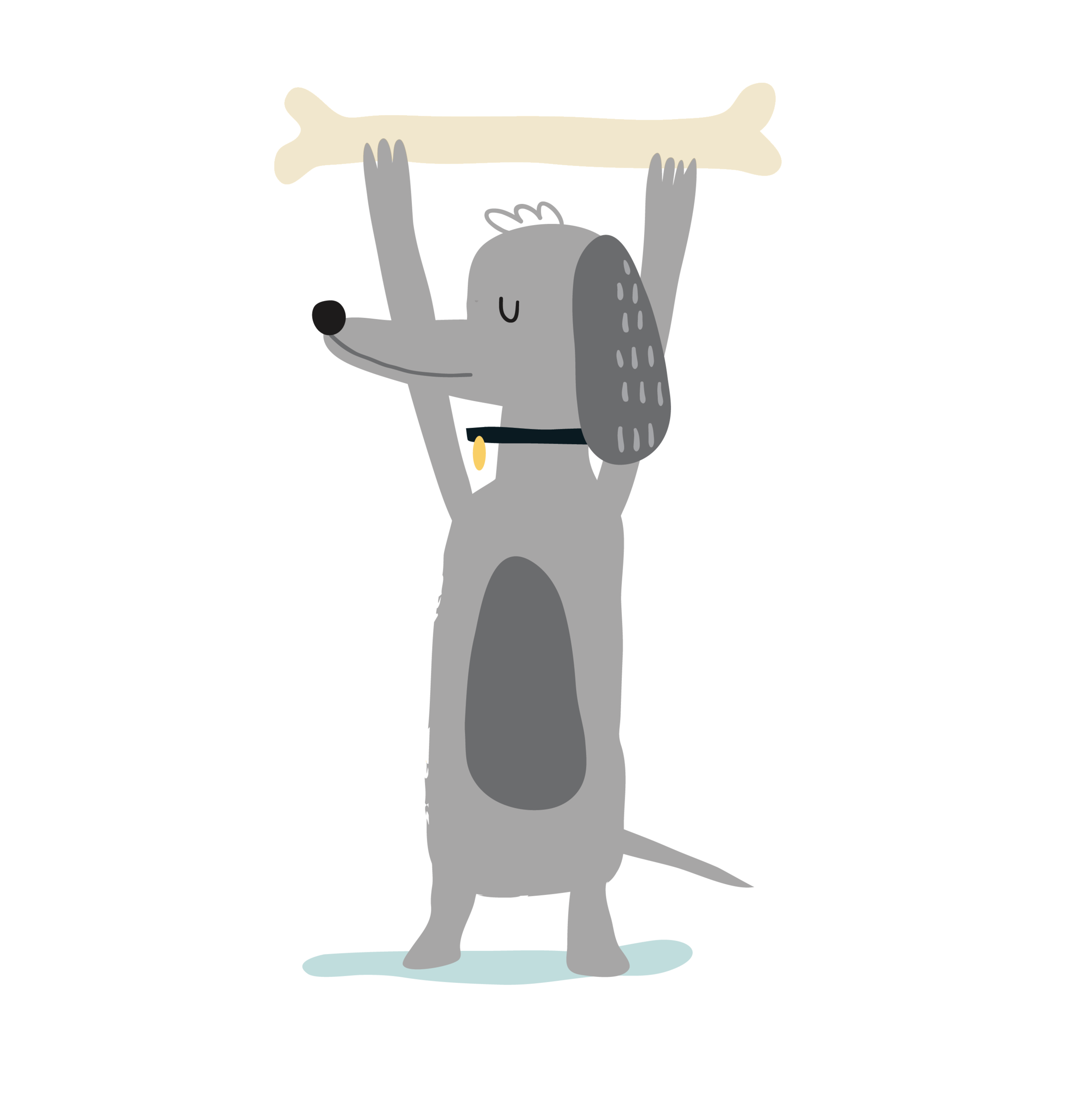 Dog boarding kennels and grooming services, located in Devon Meadows, South East Melbourne.  Servicing areas including Sandhurst, Narre Warren, Frankston, Mornington, Seaford, Carrum, Bon-Beach, Patterson Lakes, Chelsea, Edithvale and Bayside suburbs including Sandringham, Hampton, Brighton, Elwood, St. Kilda