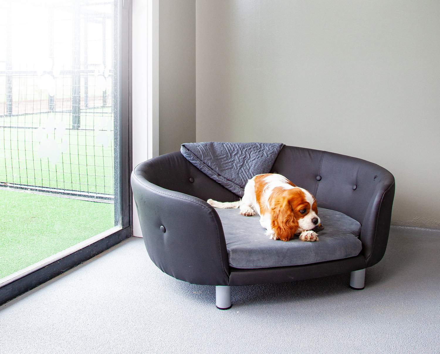 Our state of the art, luxurious modern dog kennels are large and spacious. Green Meadows Pet Resort specialises in first time and long term boarders.
