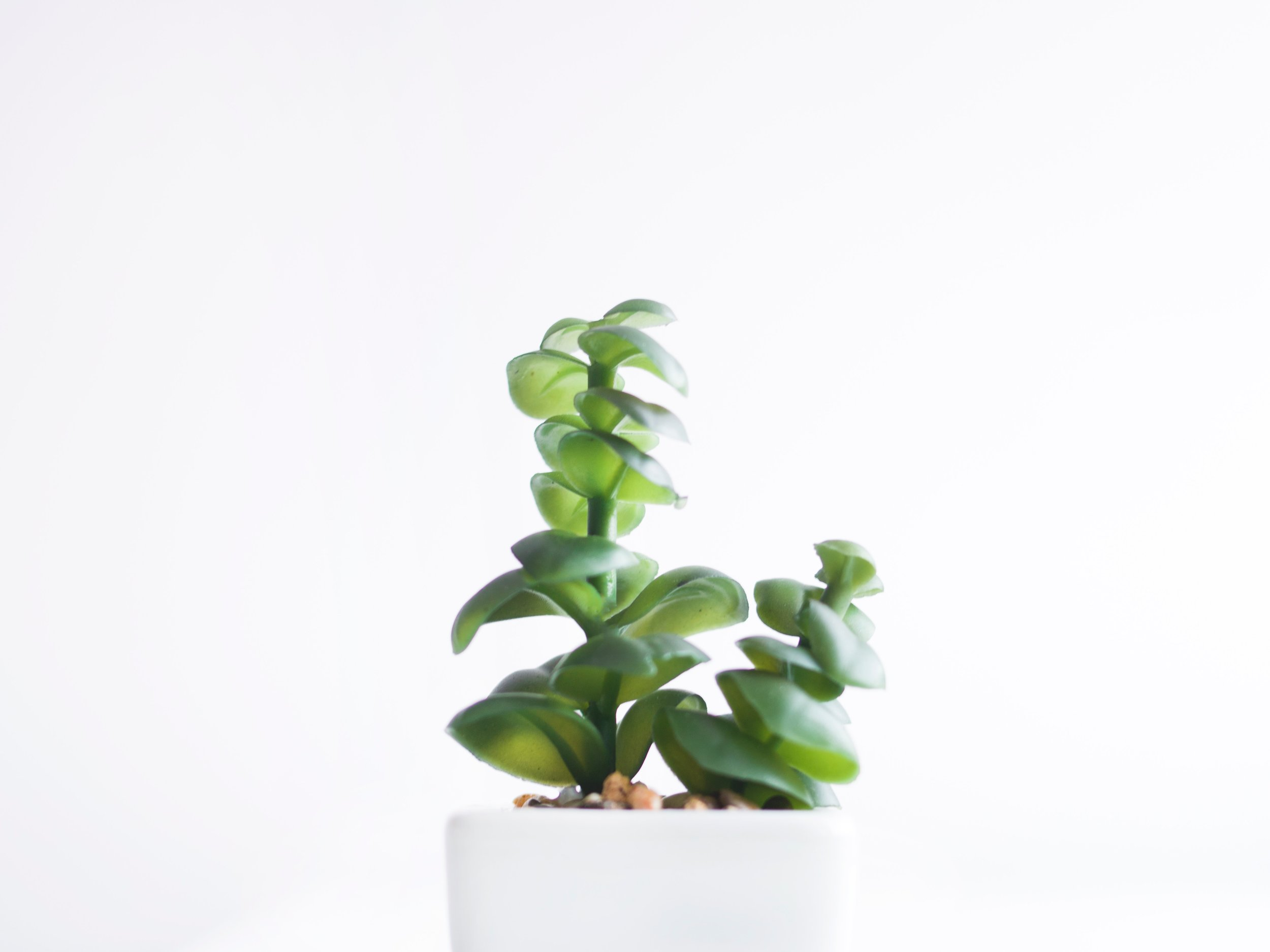 The Succulent Potted Plant - You will experience the wonderful bond of office companionship if you learn to speak to them just right.