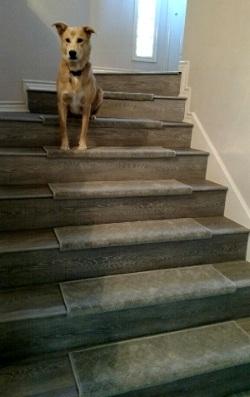 Pam's stairs…