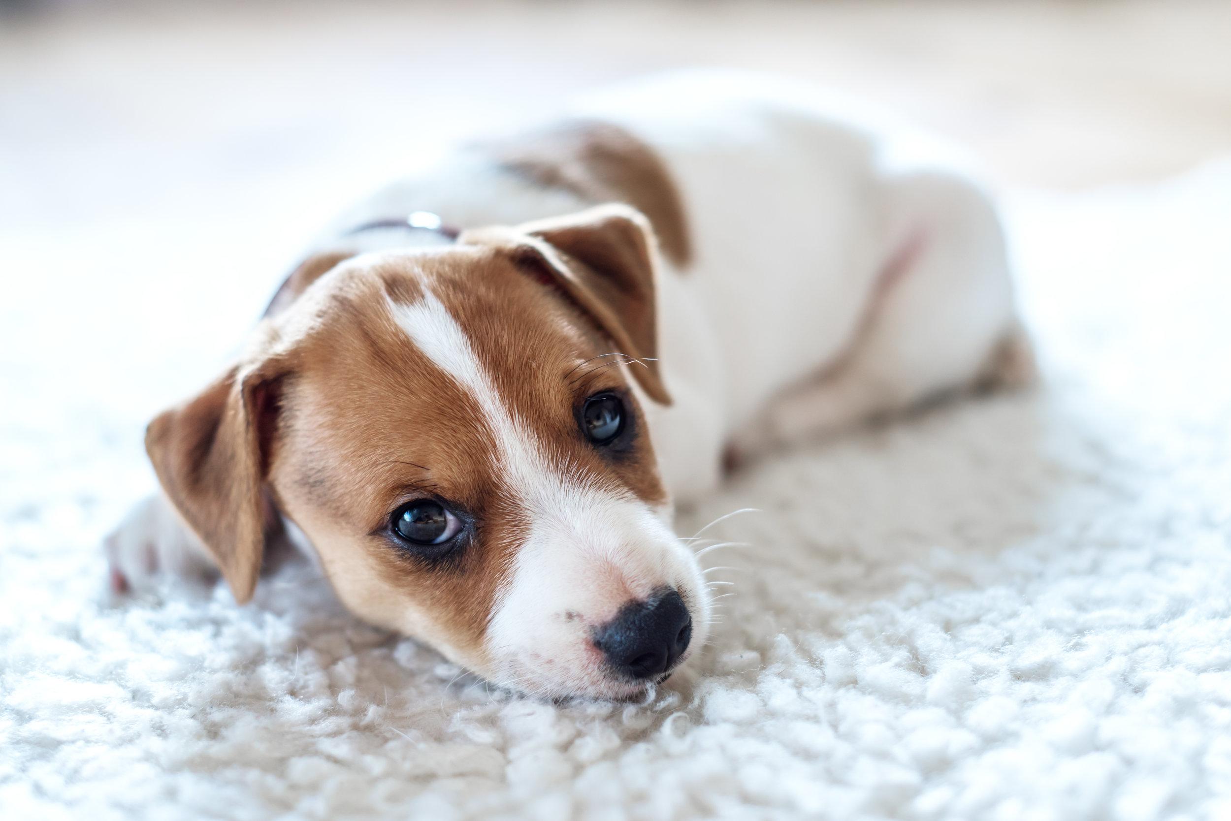 Puppy Image2.jpg