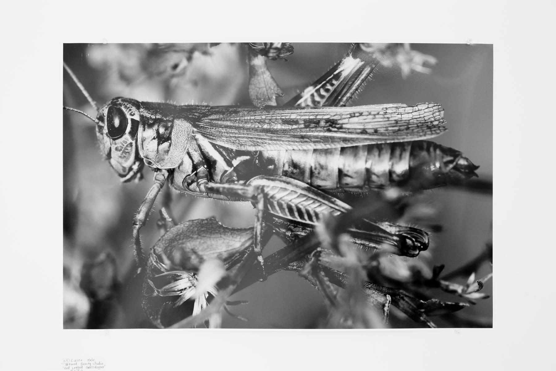 """Laura Hale - """"Red Legged Grasshopper"""" Insta: @FoundBeautyStudio  For Sale: $150"""