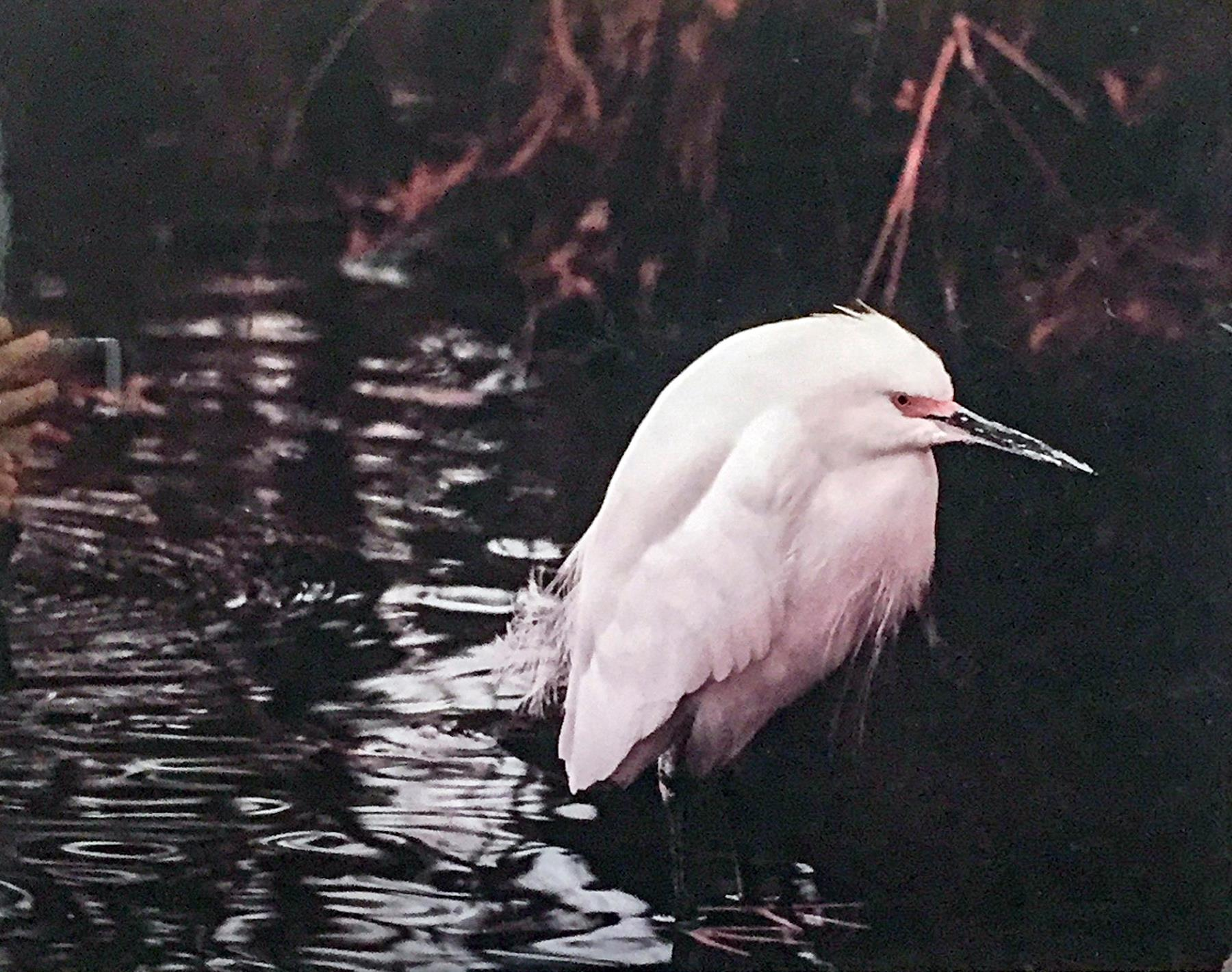"Eric Hobson - ""Ivory Angel"" Insta: @apollodubois  For Sale: $150"