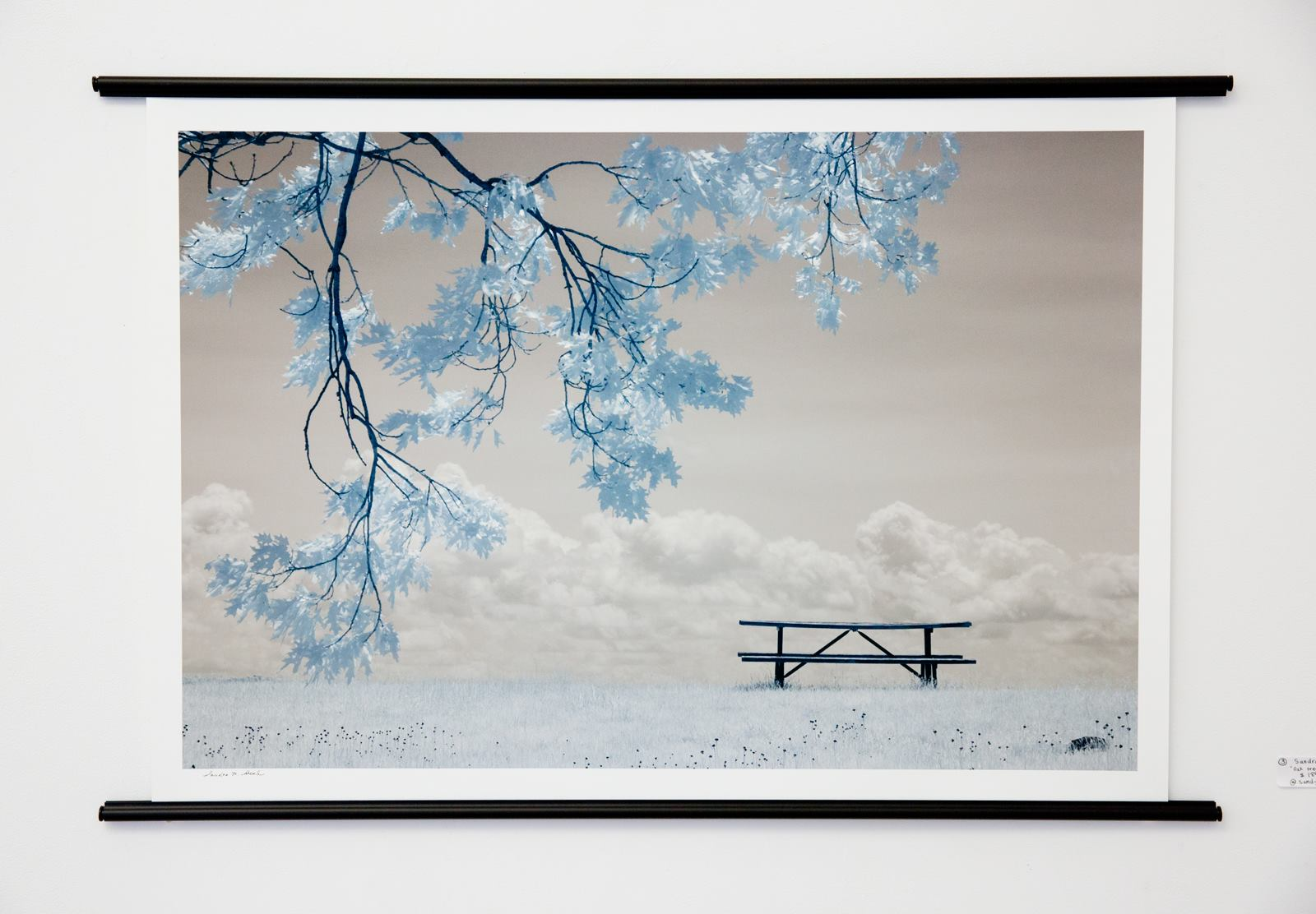 "Sandra Shenk - ""Oak Tree and Picnic Table"" For Sale: $185 Insta: @sandycreativepics"