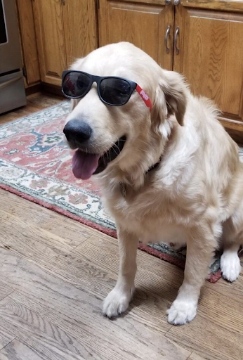 - Picture Cred: @sophia_spearWith these shades alone, this dog is cooler than the entire student population of Centennial high school.Rating: 11/10