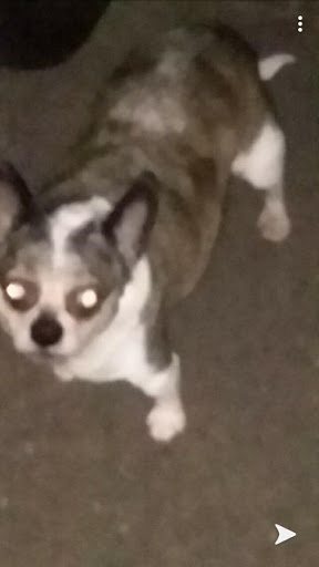 possesseddog.jpg