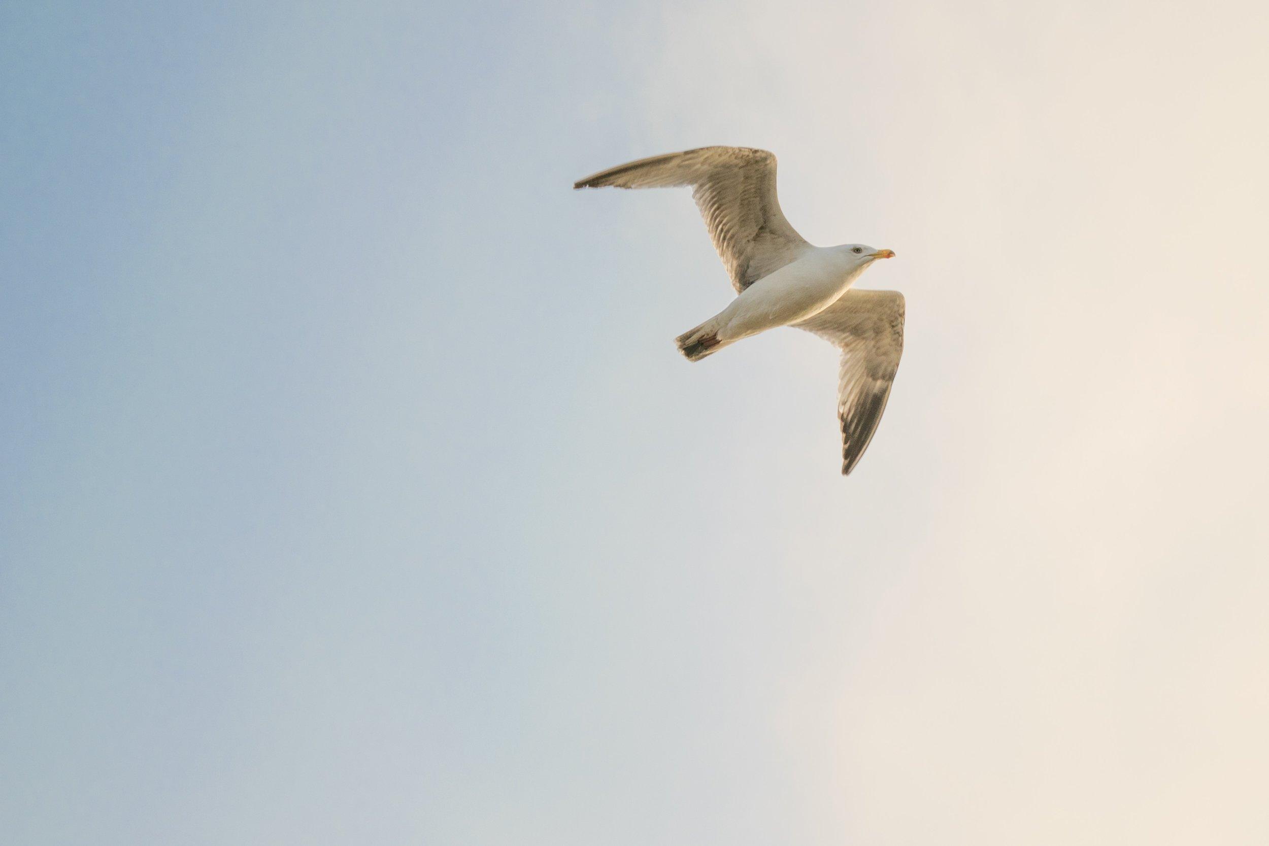 seabird - by Avanti Tulpule