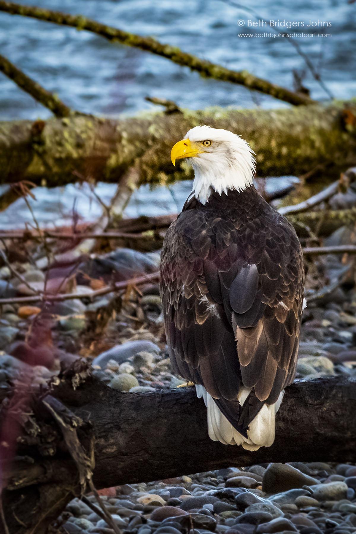 Avian Nobility
