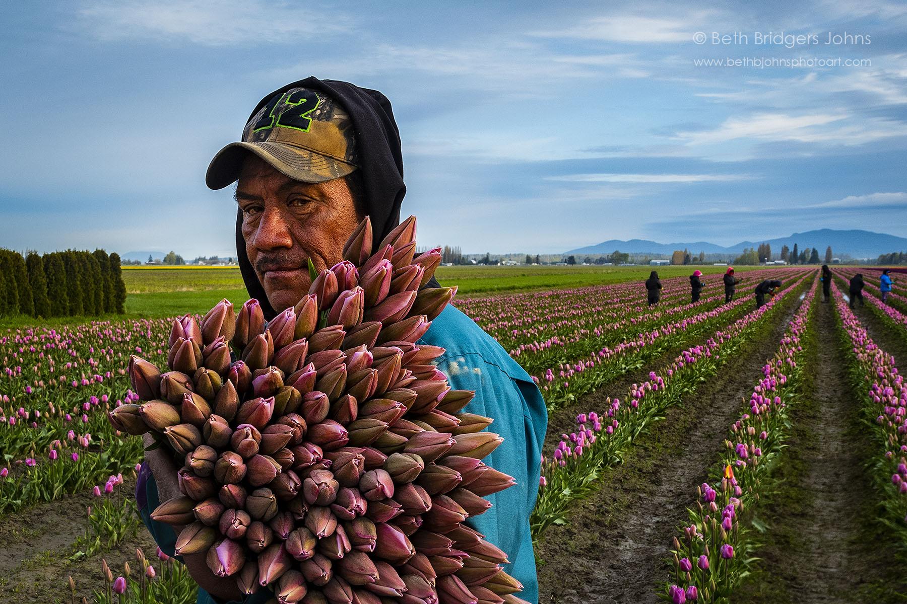 Worker in Tulip Fields