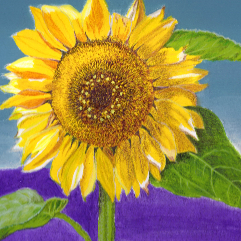 Lavender Sunflower