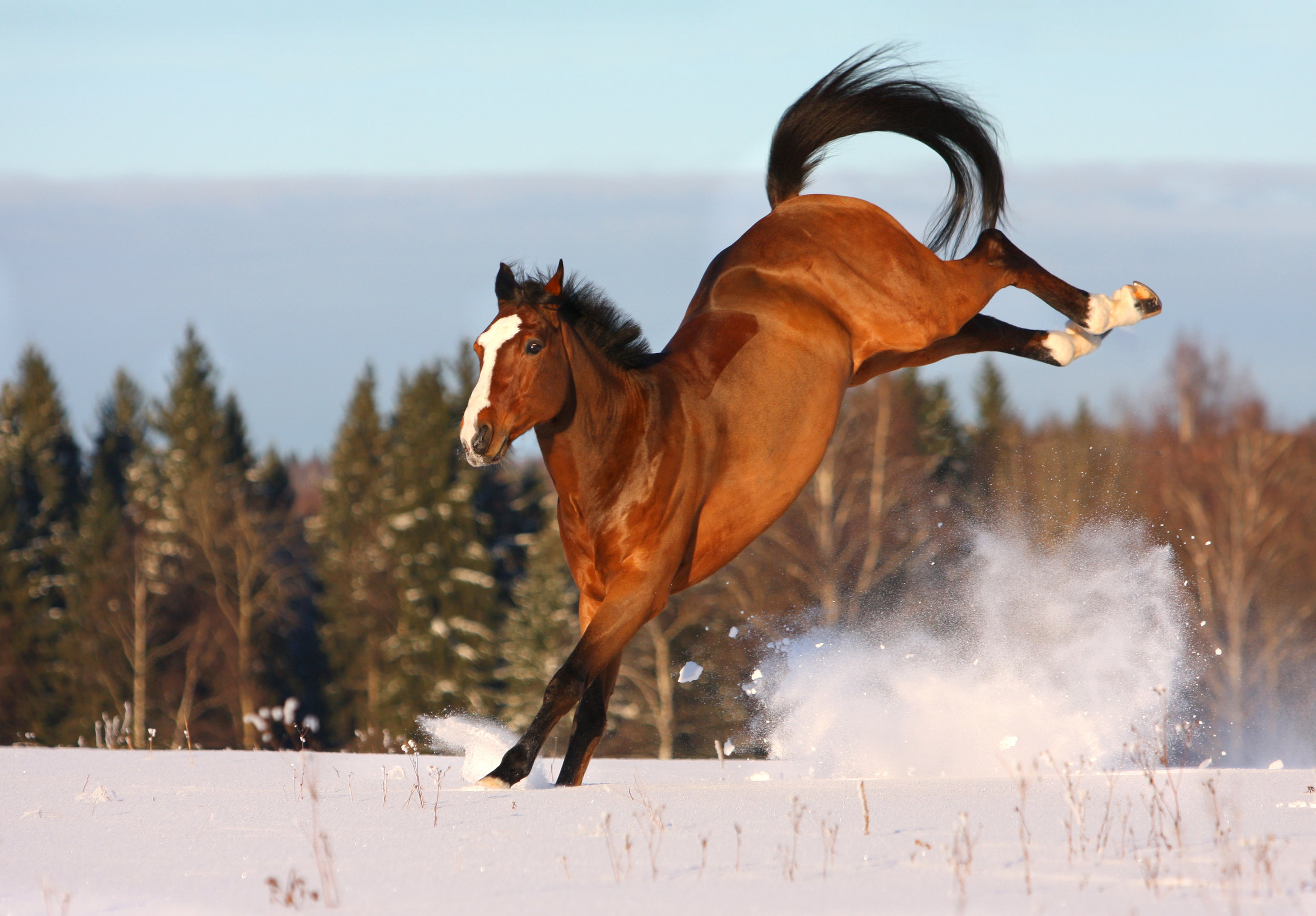 Horse Care In Autumn And Winter Horse And Pony Info