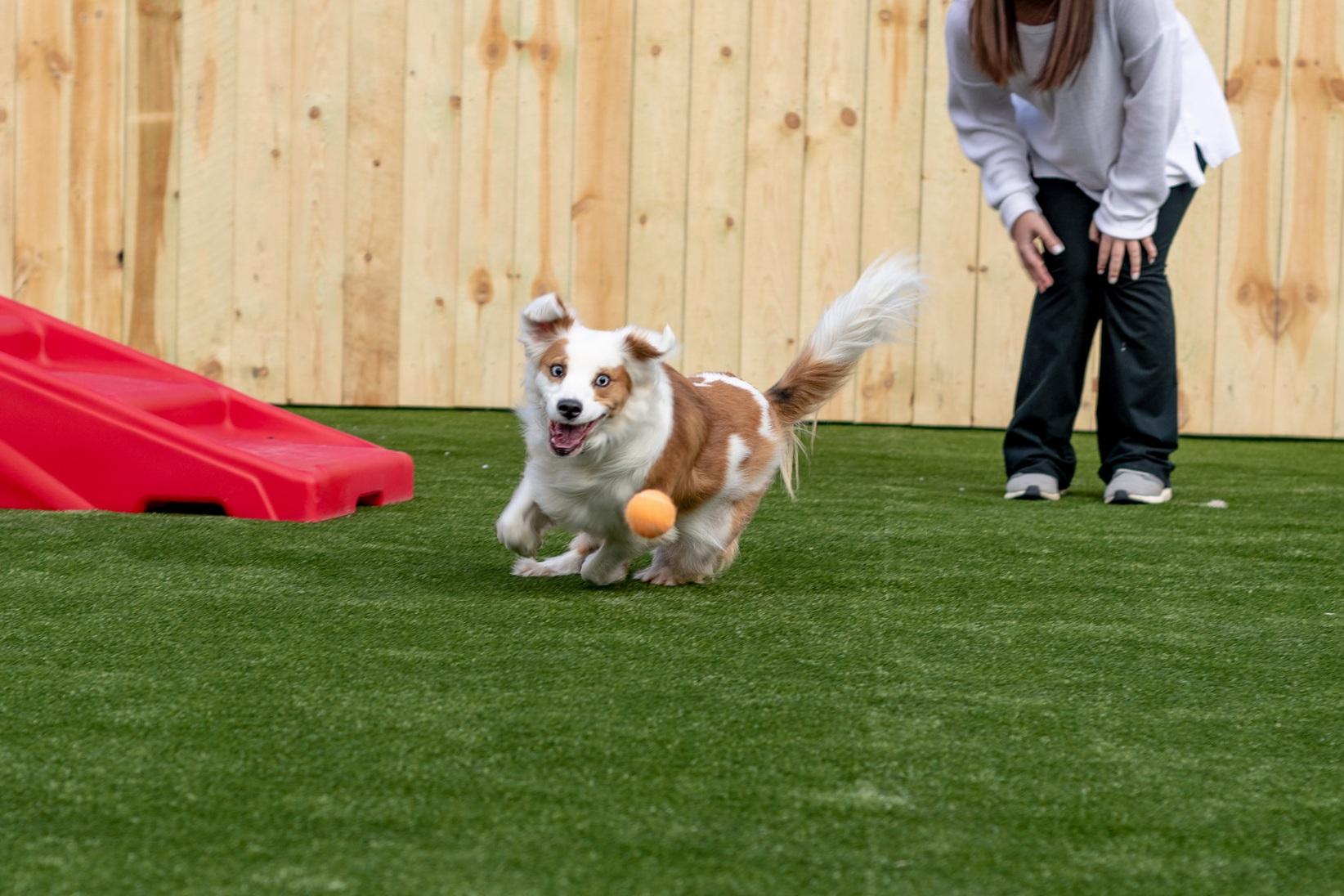 dog - Daycare