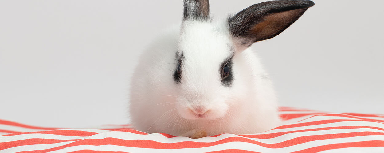 Rabbit sitting on cushion
