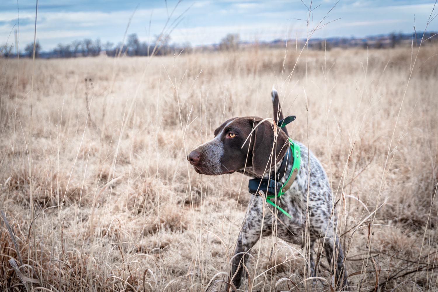 Bird Dog Hunting Blog Standing Stone Kennels