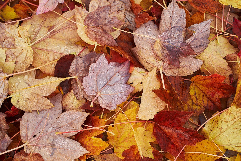 autumn2018 022.jpg